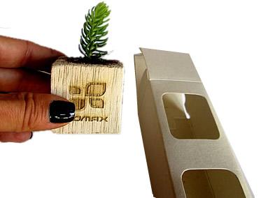 Suculenta en mini matera de madera con caja