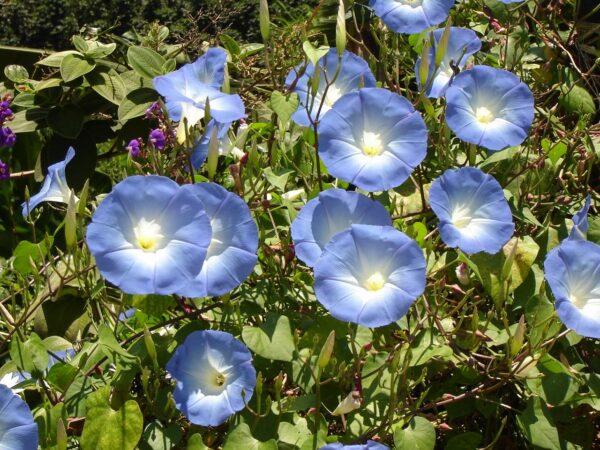 Kit para sembrar un jardín de flores