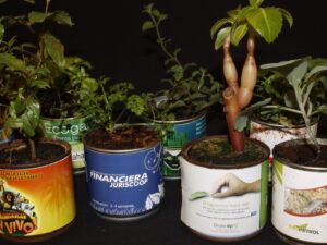 Planta Enlatada Personalizada para regalo corporativo