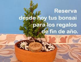 Bonsái y plantas adultas para regalos corporativos